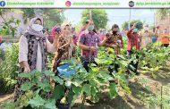 Hari Tani Nasional Tahun 2020 : Panen bersama di KWT Assidiq Kel. Mayang Mangurai Kec. Alam Barajo