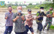 Kegiatan Tanam Padi Inpari 24 di KT. Teman Abadi Kel. Mudung Laut Kec. Pelayangan Kota Jambi