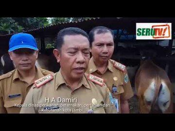 Pemeriksaan Hewan Kurban oleh Dinas Peternakan Kota Jambi